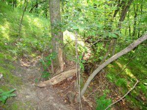 Minnesota River Valley Mountain Bike Trail